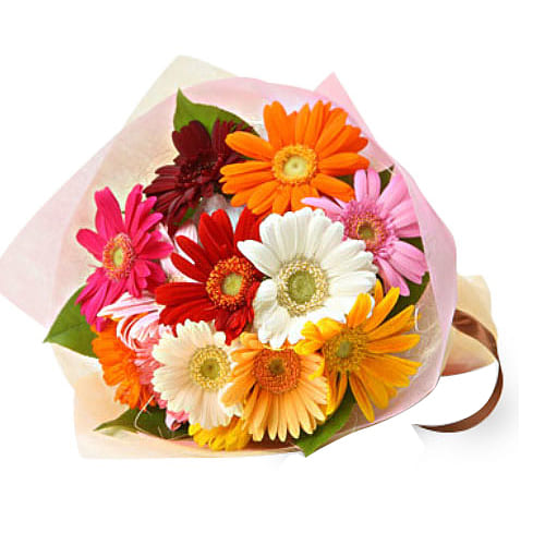 Enchanted Precious Love 10 Pcs Gerbera Bouquet