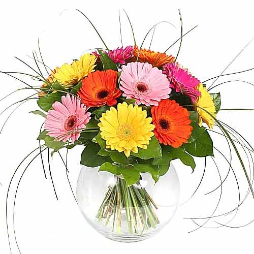 Beautiful and Fresh Gerberas in a Vase