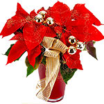 Red Poinsettia Flower Plant